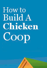 How to Build a Chicken Coop